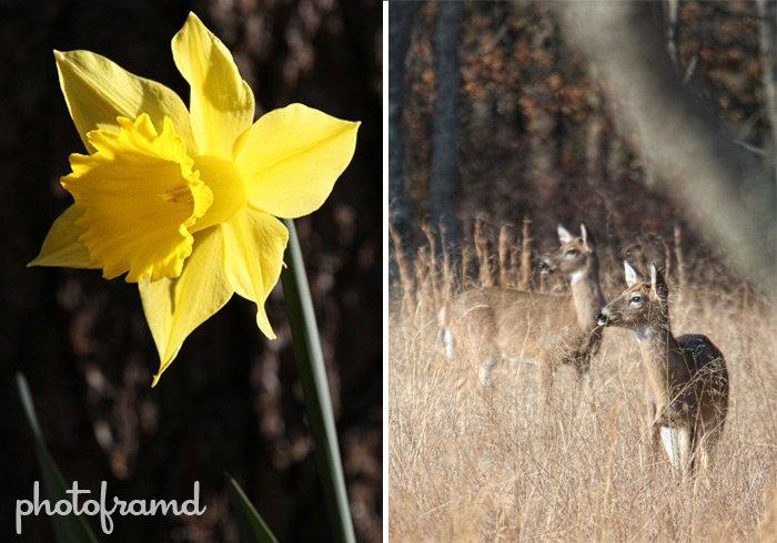spring-wait2