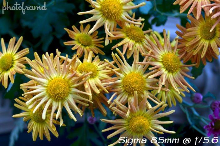 sigma85mm-add2